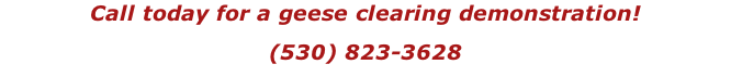 Call today for a geese clearing demonstration! (530) 823-3628